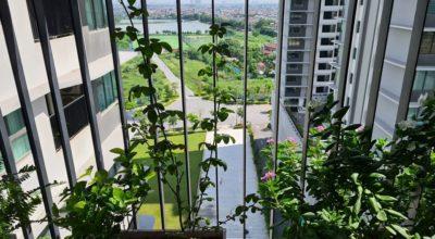 View từ căn 01 tòa A Chung cư The Zen